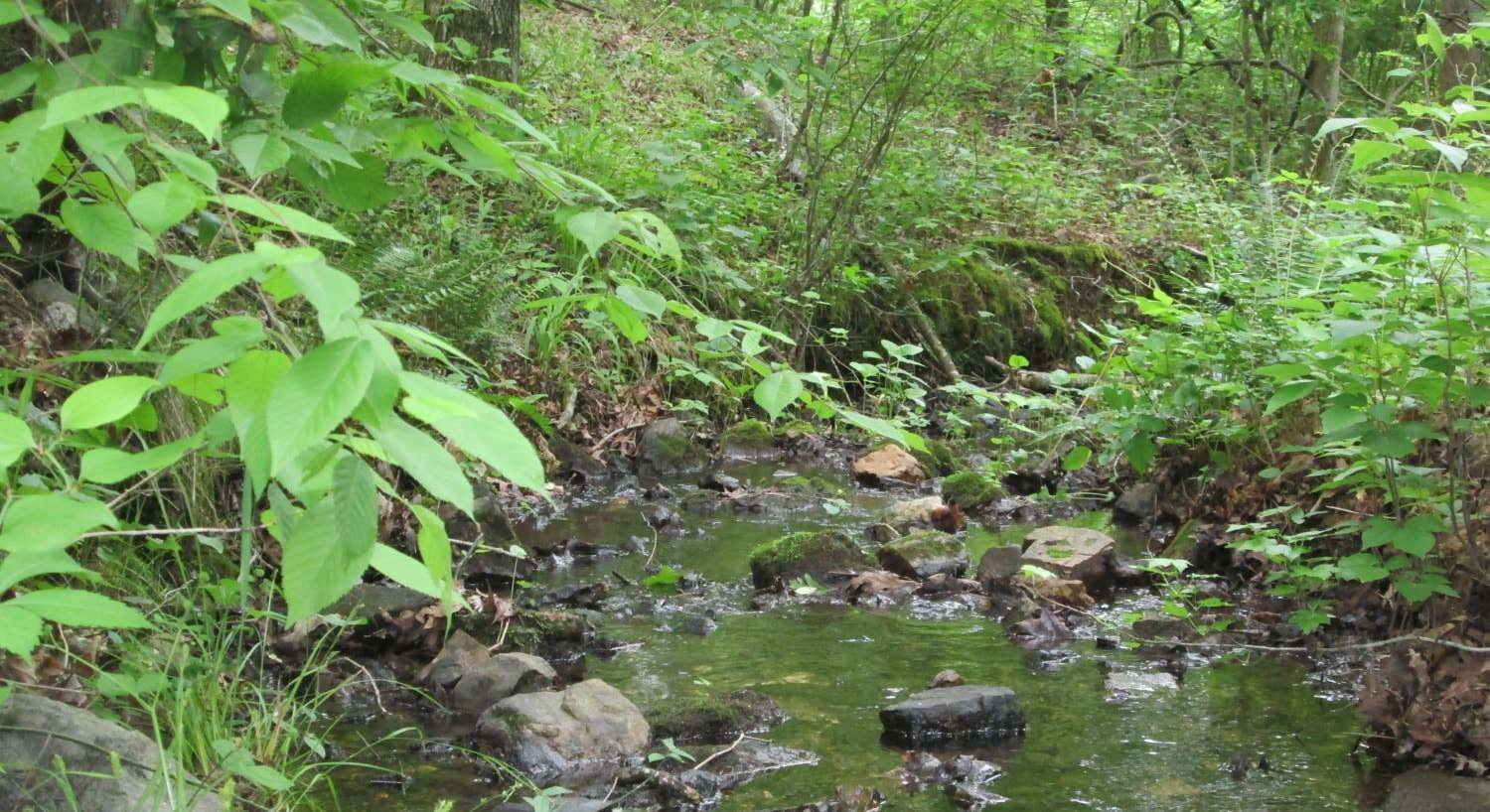 Water rippling over rocks surrounded by green leafy plants