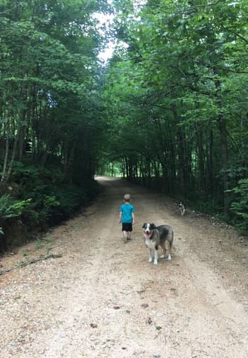 Dirt road surrounded by lush, green trees with a little boy and dog walking on road